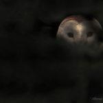 1-Alfonso Roberto Apicella - Barbagianni, Scozia