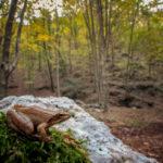 2-Rana italica, Monte Polveracchio (Campania) - Ciro De Simone