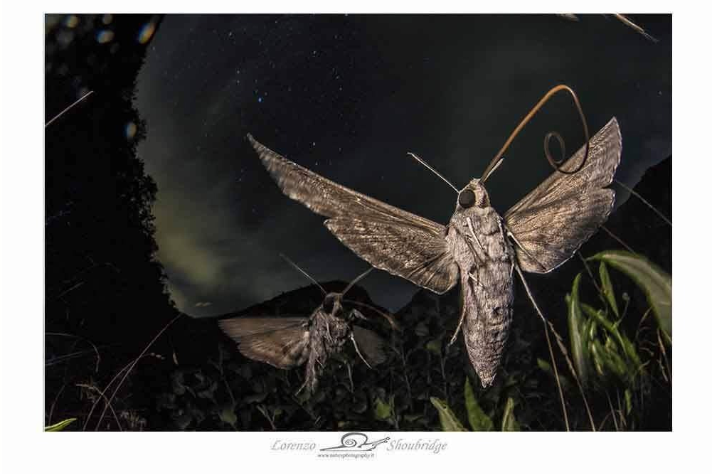Fotografia premiata nella categoria Behavoir: invertebrates 2019