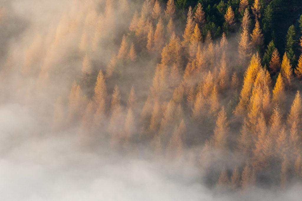 larici-in-autunno-49694059261-o_orig