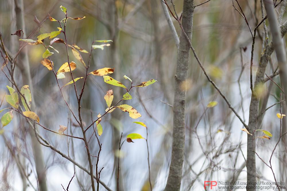 stagno in autunno