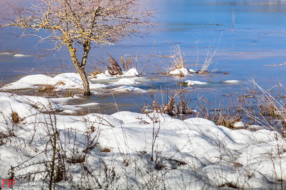 stagno in inverno
