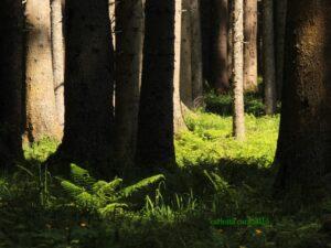 bosco controluce
